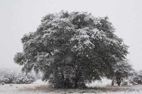 A tree I found while out on walkabout in Prescott, Ariz., on December 31st, 2014